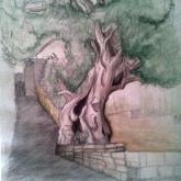 stará oliva - akvarel, tuš